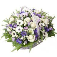 Purple basket of anemones