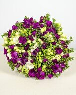 White-purple freesia