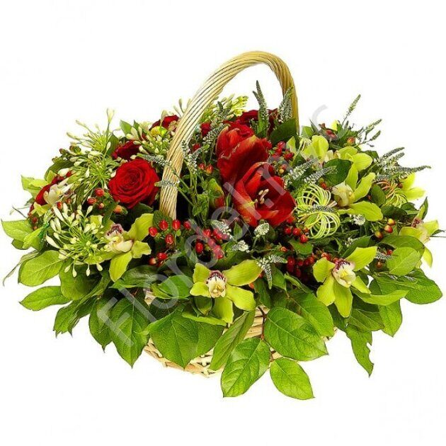 Basket of orchids and amarilyses