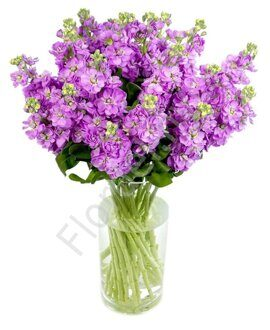Lavander Stock flower bouquet