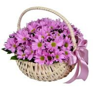 Basket of pink chrysanthemums