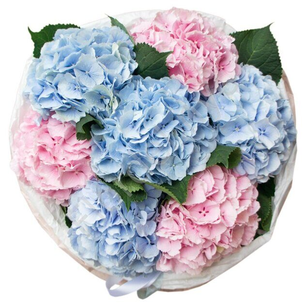 Pink and blue hydrangea bouquet