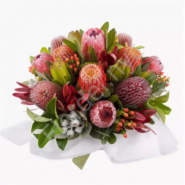 Proteas and banksias