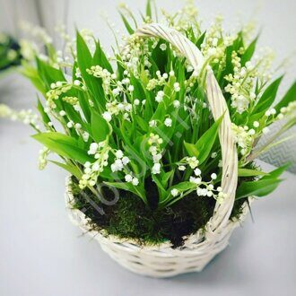 Forest arrangement of Lilies of the valley