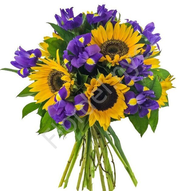 Sunflowers with irises