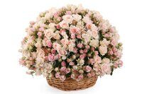 Pastel shrub roses basket