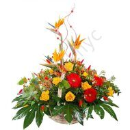 Bird of paradise bright basket