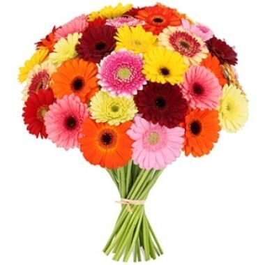 Multi-colored gerberas in bouquet