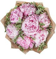 Pink peonies with pittosporum