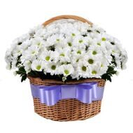 Basket of chrysanthemums