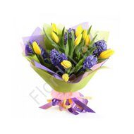 Hyacinths and yellow tulips