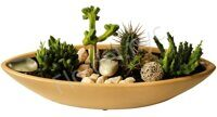 Dish of cactuses and succulents