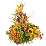 Bird of paradise large basket
