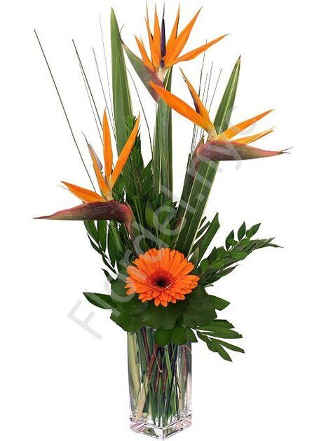 Bird of paradise orange bouquet