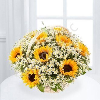 Sunflowers with daisies