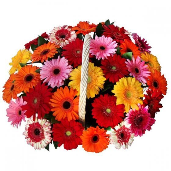 Basket of multi-colored gerberas