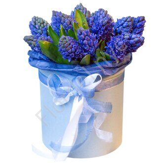 Box of blue hyacinths