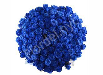 Grand bouquet of blue roses