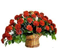 Red carnation's sympathy basket