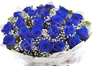 Blue rose with gypsofila
