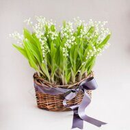 Lily of the valley basket
