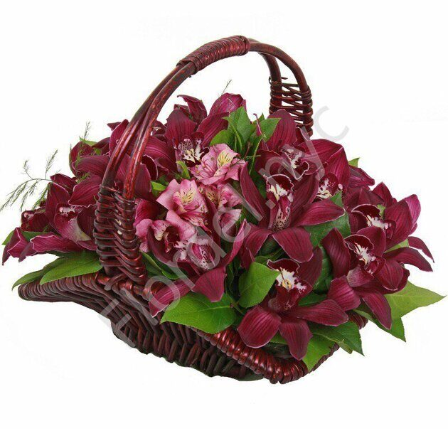 Burgundy basket of orchids