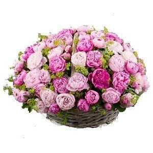 Basket of peonies