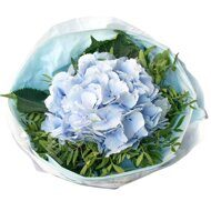 Single hydrangea bouquet