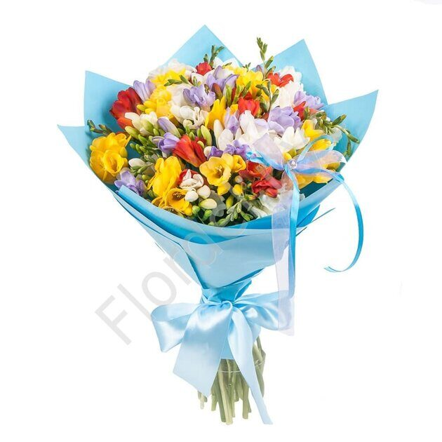 Freesia wrapped in blue paper