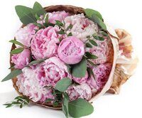 15 peonies with eucalyptus