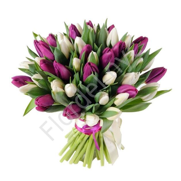 White and purple tulips